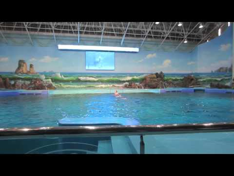 North Korean dolphin show (March 2014)
