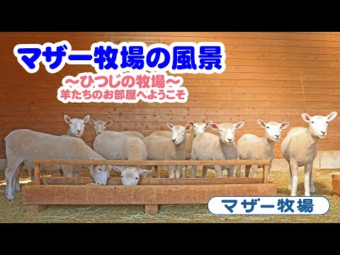 マザー牧場の風景~ひつじの牧場~