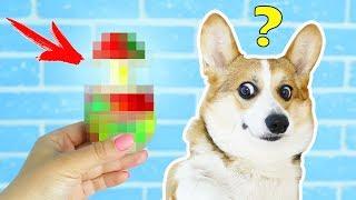 ОЖИДАНИЕ и РЕАЛЬНОСТЬ | Игрушки для собак | АНТИСТРЕСС из КИТАЯ 😲 РАСПАКОВКА ПОСЫЛКИ ЧТО ВНУТРИ?