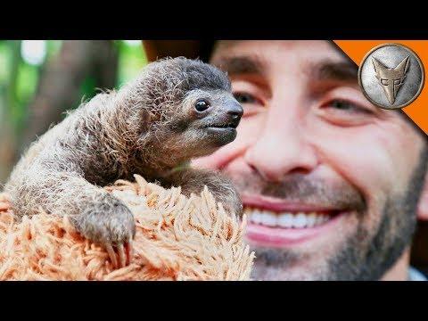Best Animal Videos of 2017!