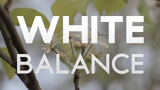 After Effects Tutorial: White Balance