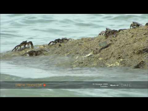 أفلام الطبيعة  السلطعونات