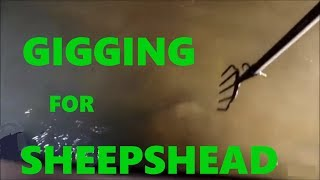 Spear Fishing Gigging for Sheepshead Flounder Mangroves GoPro