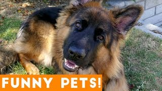 Funniest Pets & Animals of the Week Compilation August 2018 | Funny Pet Videos