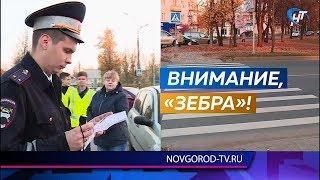 Статистика ДТП на пешеходных переходах тревожит сотрудников Госавтоинспекции