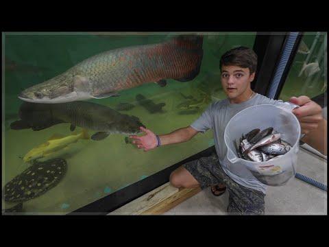 LARGEST indoor Aquarium FISH FEEDING!!!