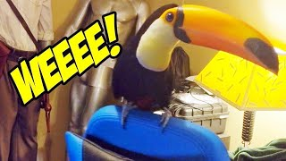 Literally Just a Toucan Spinning on a Chair
