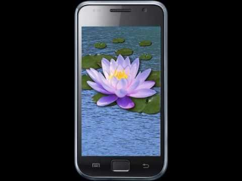 Video of Flowers. Magic Touch Wallpaper