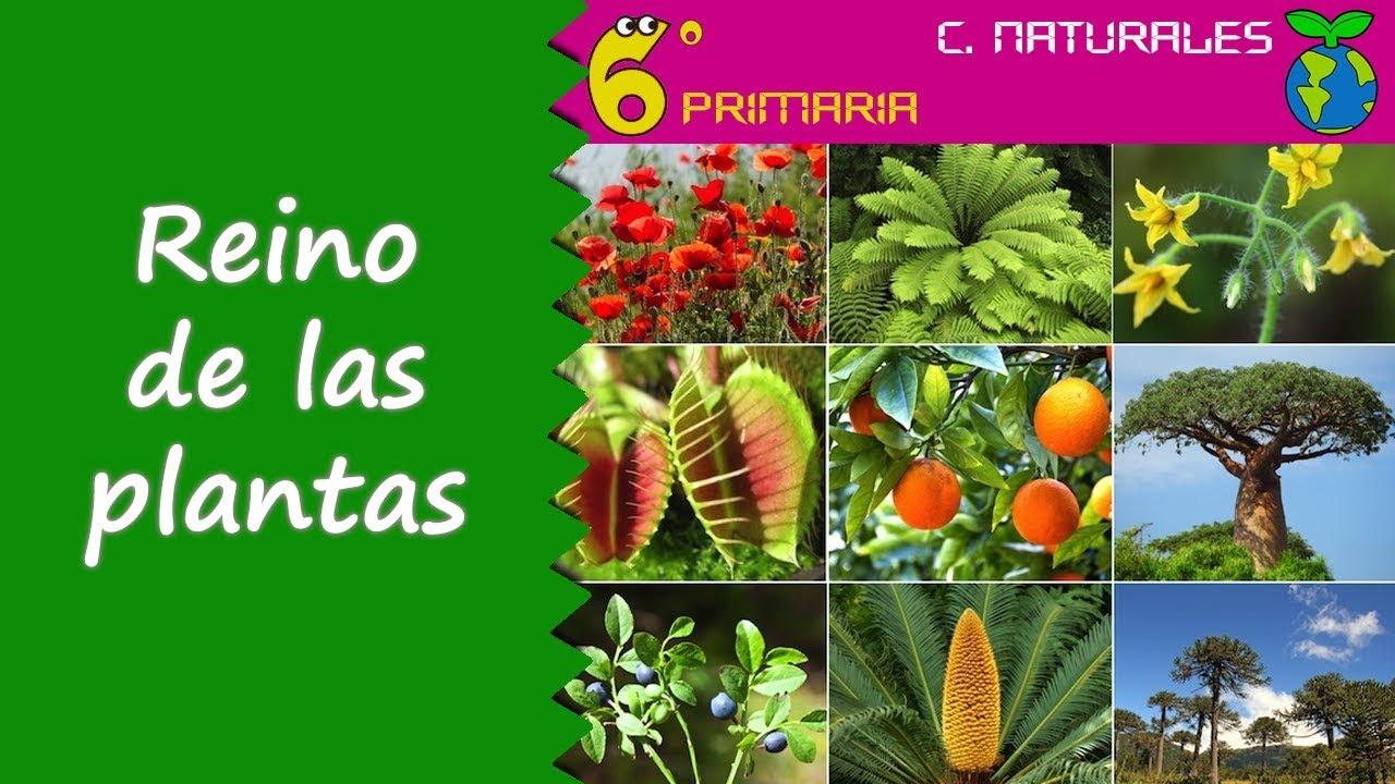 Reino de las plantas. Naturales, 6º Primaria