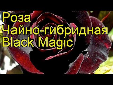 Заказать книгу черная и белая магия