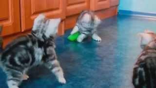 Офигенный ролик с котятами | От них даже пес балдеет