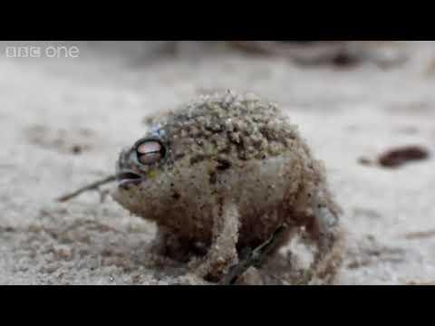 高雄發財蛙