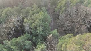 #FPV #DJI FPV Combo #Freestyle #Acro DJI FPV Copter im und überm Wald getestet. 3 Crashs ...