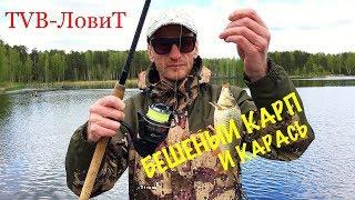 РЫБАЛКА! Бешеный клёв Карпа Карася и Леща | Сумасшедшая рыба вырывает фидер!