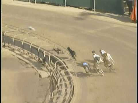 Race 8 Greyhounds as Pets of NE Florida Stake