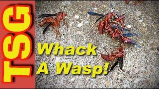 How to Kill Red Wasps and More!