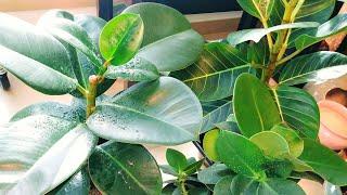 실내공기정화식물 잘키우기(How To Grow An Air Purification Plant)