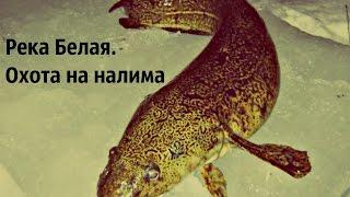 В башкирии рыбалка на налима