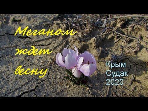 Зимние цветы прогоняют зиму. Меганом 30 января 2020, Крым, Судак