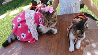 Kedicik Alina ve miniklerin kıyafet balosu , eğlenceli çocuk videosu