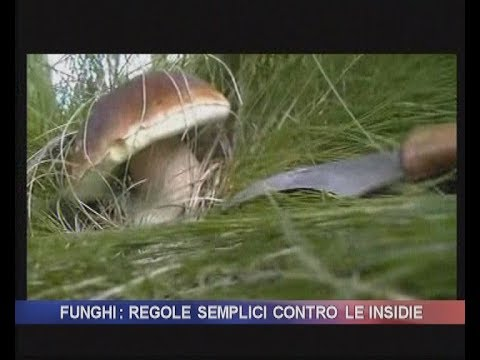 Se il fungo su unghie è pericoloso durante gravidanza