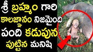 బ్రహ్మం గారి కాలజ్ఞానం నిజమైంది..పంది కడుపునా పుట్టిన మనిషి   breaking news: pig gave birth to a man