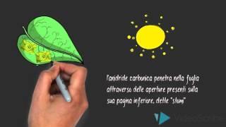 La fotosintesi clorofilliana - Lezione animata