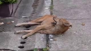 WARNING - MAY BE UPSETTING - Rabid Dog