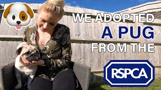 How you can adopt a dog from the RSPCA - The process explained!