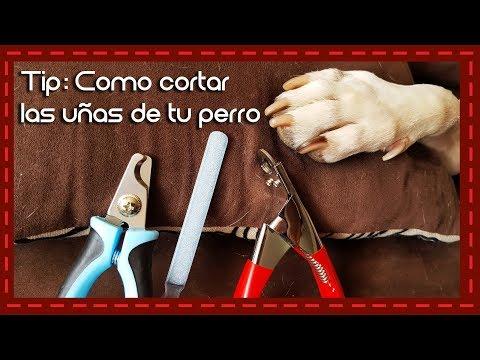 Tip: Como cortar las uñas de un perro l How to cut a dog's nails