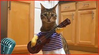 Приколы с котами #11 милые коты, lovely cats