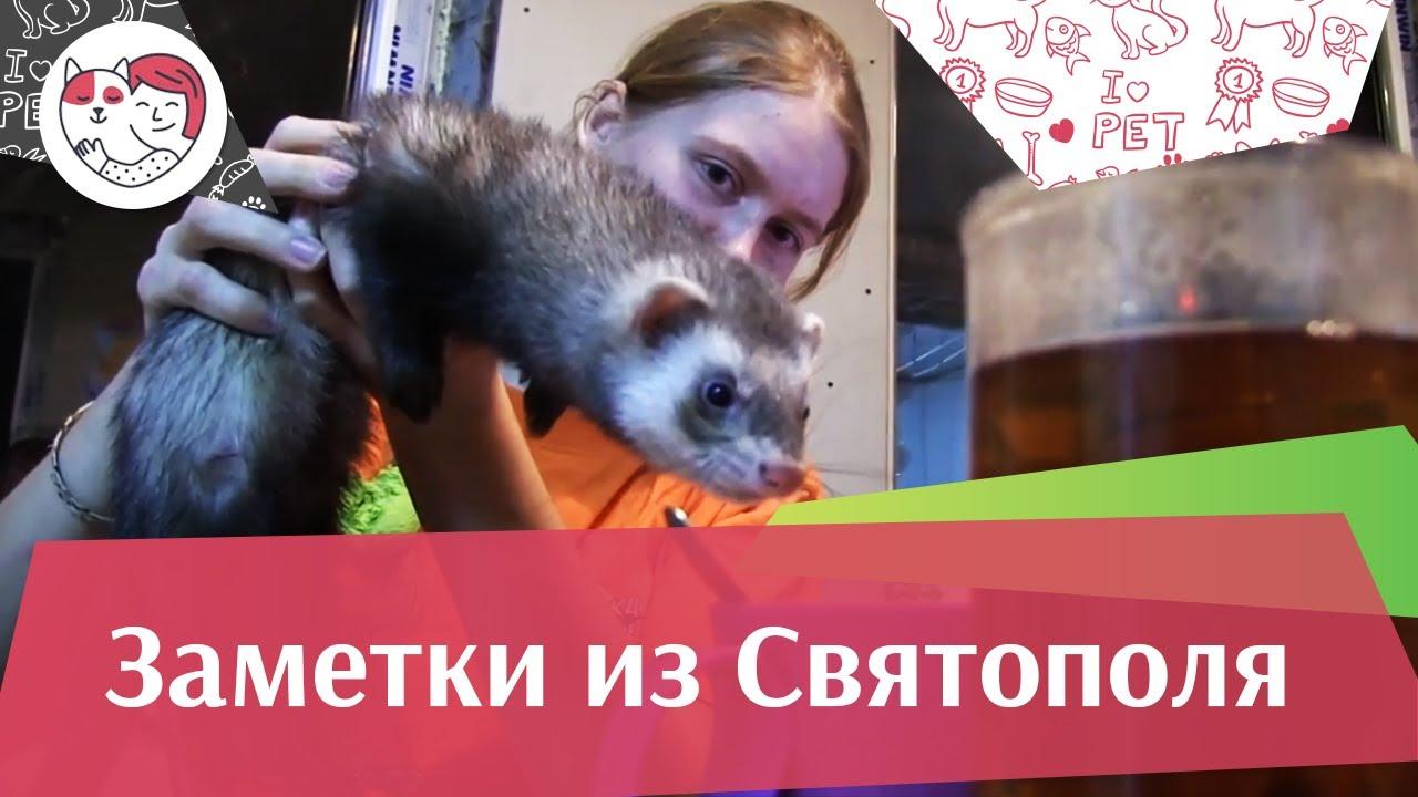 ЗАМЕТКИ ИЗ СВЯТОПОЛЯ выпуск 7 на ilikepet