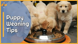 How to Wean Puppies onto Solid Food - Top Tips!