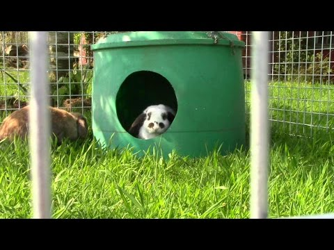 , title : 'How To Make A Simple Outside Rabbit Run - And Sad Free-Range Rabbit Update : - (