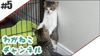 #5【吾輩】兄弟攻防戦【猫】
