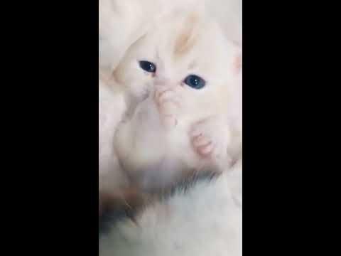 【抖音】寵物合集44 - Come and have stewed kittens,hehehe
