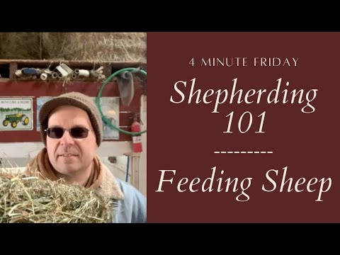 , title : 'What to Feed Sheep (Part One)