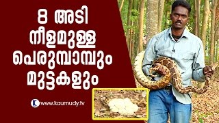 Amazing 8-feet Python and its eggs | Snake Master EP 243 | Kaumudy TV