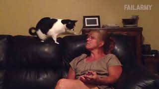 #121 Подборка видео с животными / #121 Best animals video compilation