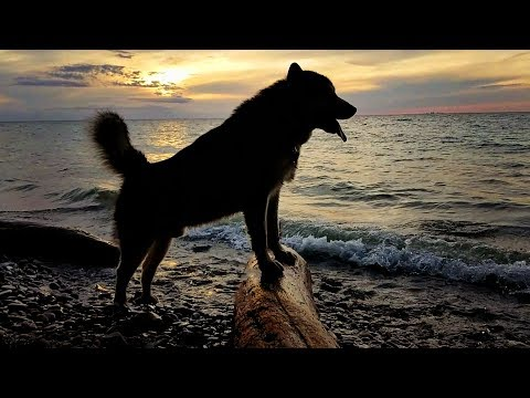 Tonka Swims In Lake Ontario & Watched The Sunset