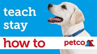 How to Train Your Dog to Stay (Petco)
