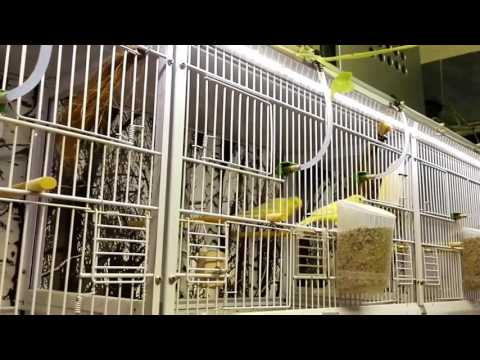 Impianto illuminazione a strip-led allevamento canarini