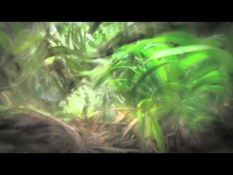 Bryan Arata Music - Fruition