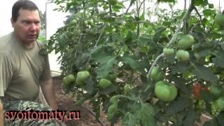 Когда и как обрезать листья у томатов