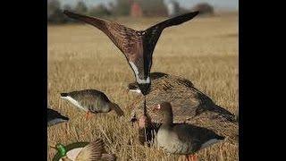 Приманка для гусей на охоте