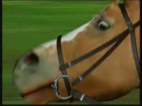 Do bits hurt horses tougues? | Yahoo Answers