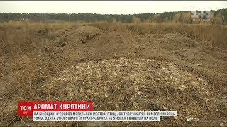 На Київщині жителі села звинувачують птахоферму у створенні могильника курей