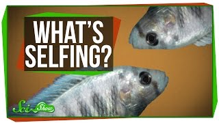 What is Selfing?
