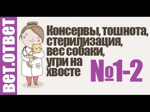 ЧаВо 1-2 Консервы, стерилизация, тошнота, вес собаки. Ответы ветеринара
