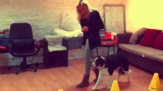 Audrey Vander Perre, Comportementaliste canin.